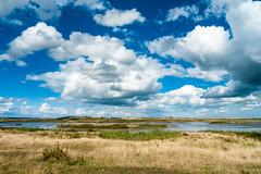 Oare marshes view Kent