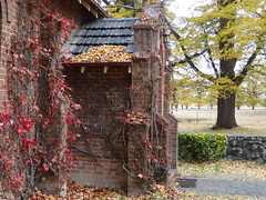 Virginia Creeper over the Anglican chapel on Gostwyck Station near Uralla New South Wales. Chapel built in 1922.