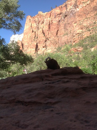 buddy at zion