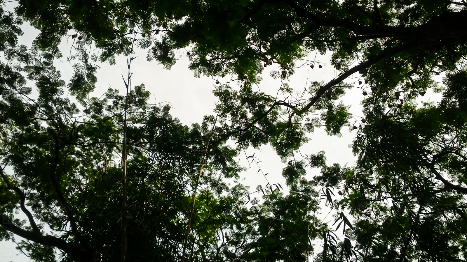 Bats at Bamnoli!