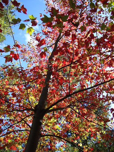 Lake George red tree from underneath