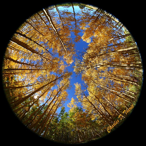 5d 815mm aspens autumn canon colorado coloradosprings cripplecreek cripplecreekcemetery explore fisheye mountpisgahcemetery unitedstates usa flickrsfinestimages1 landscape cityscape seascape scape landscapes ef815mm f4l usm ef815mmf4lfisheyeusm america northamerica classic eos5d eos5dclassic 5dclassic 5dmark1 5dmarki co teller county united states north fall season color best wonderful perfect fabulous great photo pic picture image photograph