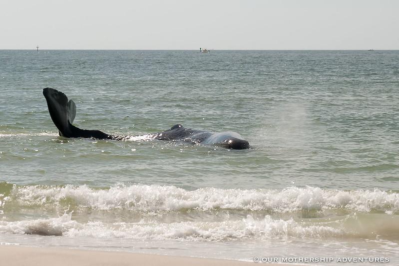 Whale5,6