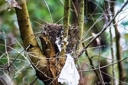 Birds nest with plastic