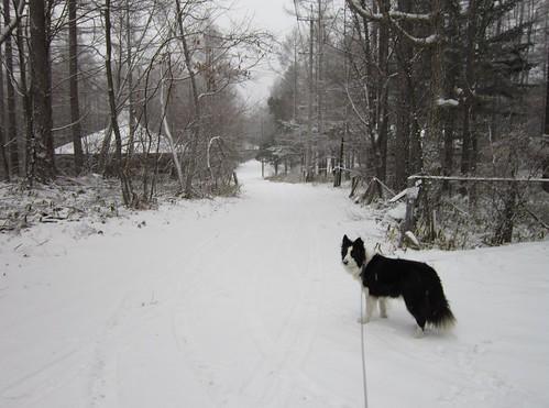 雪降る家の前の道路 2013年12月13日15:05 by Poran111