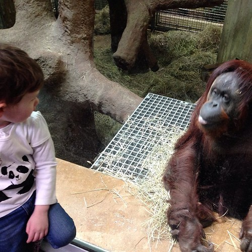 Soleil meets orangutan by Geoff Livingston