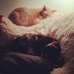 Max & Ginger