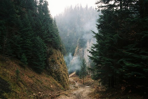 autumn nature fog forest pentax k1000 200 slovakia paradies pieniny