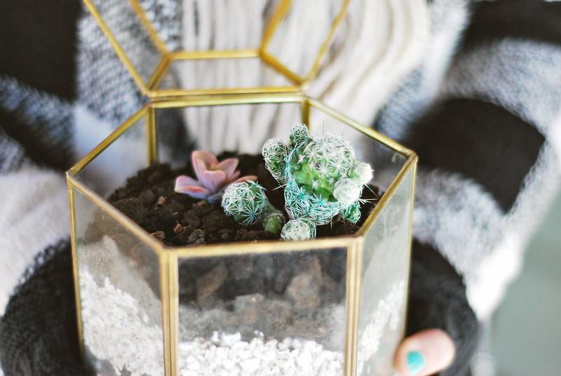 terrarium DIY