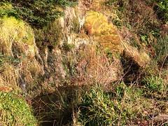 Moss and algae on the rocks