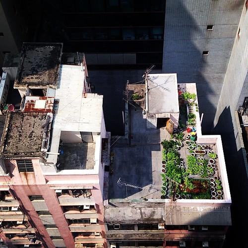 借景!階下の屋上庭園がステキ!#hongkong