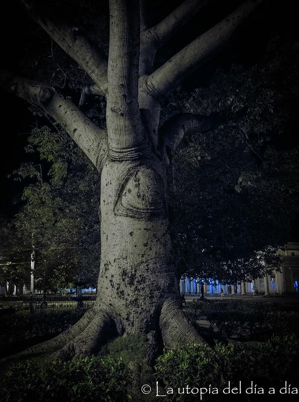 """""""Quien ose cortarle una sola rama a la Ceiba estará maldito"""".  #SoyCeibaCubana"""