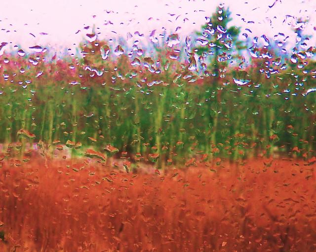 Rainy Day Drean Away, Panasonic DMC-ZS5