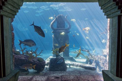 aquarium water fish blue lightrays bull statue swimming sculptures framed atlantisresort paradiseisland nassau bahamas hotel vacation luxury nikon d5