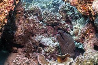 DSC00338 - moray eel - lightroom-2