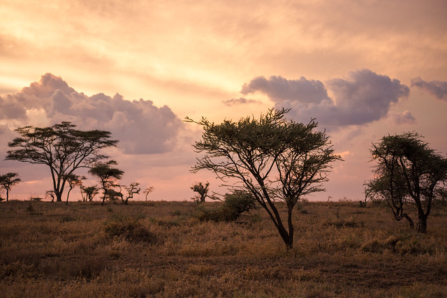 The Sunset on the Serengeti