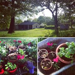 Voilà ma vue de là où je prépare mes fleurs :-) - Mijn uitzicht vanaf de plek waar ik mijn planten pot. #frankrijk #paysmellois #deuxsevres