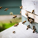 Worker Bees by *Hairbear