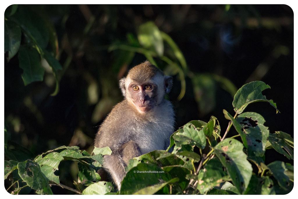 Borneo-20170411-IMG_7725