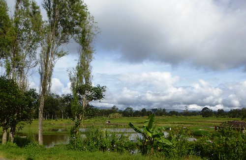 Papua13-Wamena Nord-Wosilimo (9)
