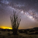 Test shot of the Milky Way and an Ocotillo. Indian Gorge in the Anza-Borrego Desert State Park. by slworking2