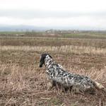 FATA DI VALTRESINARO - Coppia reperita e bloccata con sicurezza in terreno privo di vegetazione.