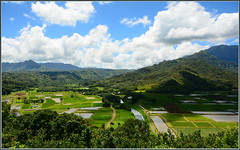 Taro Fields, Hanalei, Kauai