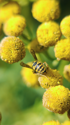 pollinators II