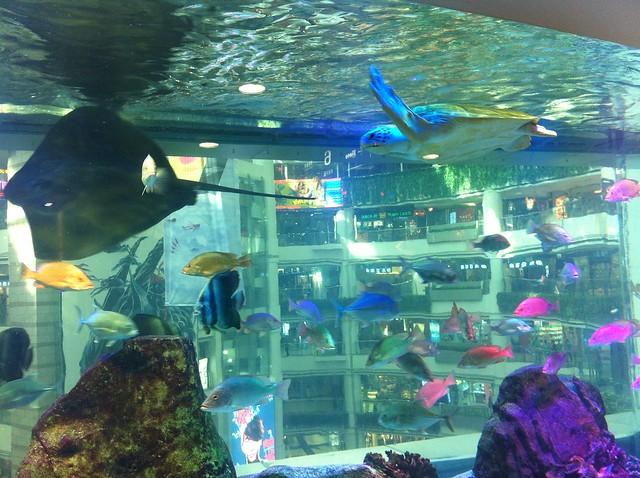 Tortuga nadando dentro del acuario de Granview Mall en la ciudad china de Guangzhou.
