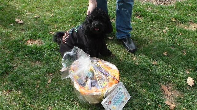 Schuylkill River Dog Park Parking