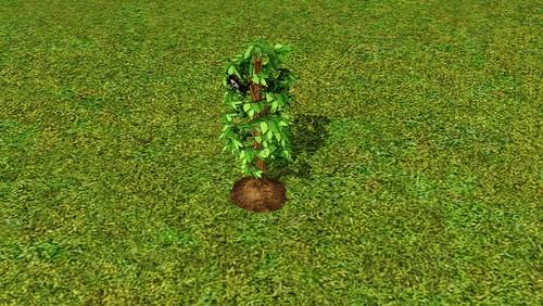 deathflower
