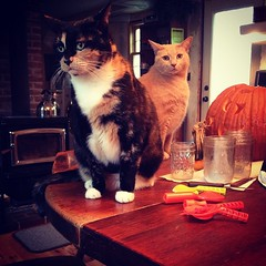 They're not really happy about this pumpkin carving situation. #cats #samhain #halloween