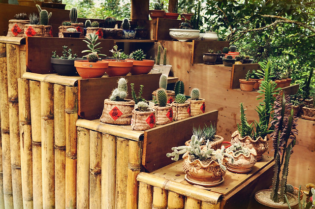 Balik Pulau Lodge (客家山寨): Cactus House