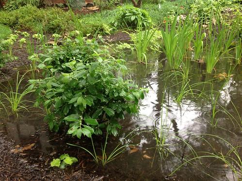 Image of a rain garden.