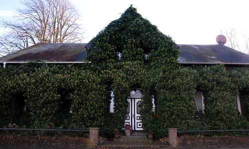 Efeu-Haus; Hohn (45)