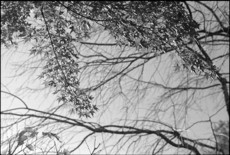 20131121 Leica3fColorheliar75 400TX TMD 001