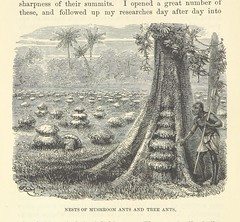 """British Library digitised image from page 282 of """"Adventures in the Great Forest of Equatorial Africa and the country of the dwarfs .. An abridged ... edition ... With ... illustrations"""""""