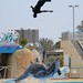 Dolphin pushes man to a super jump at Marineland in Antibes, France ©eiolos