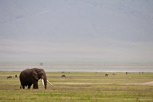 africa travel wild 20d canon tanzania place wildlife sigma safari ngorongoro 2014