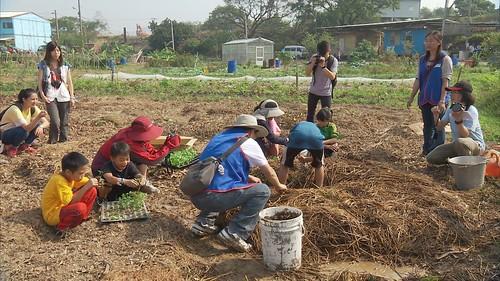 不施藥,也不常除草,陳建泰選擇了樸門的厚土種植法。