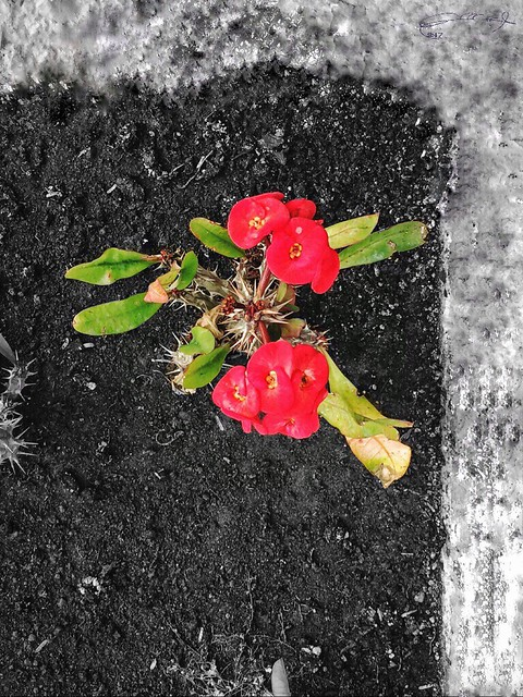 Life 🌹 canon 70D 18-55mm