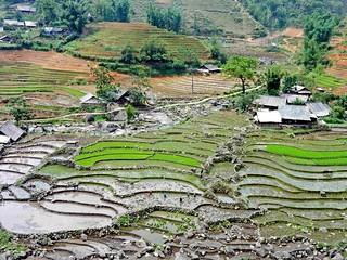 Rice fields in Sa Pa | Reisfelder in Sapa
