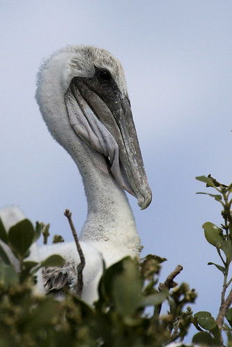 bif flight bird shore inflight