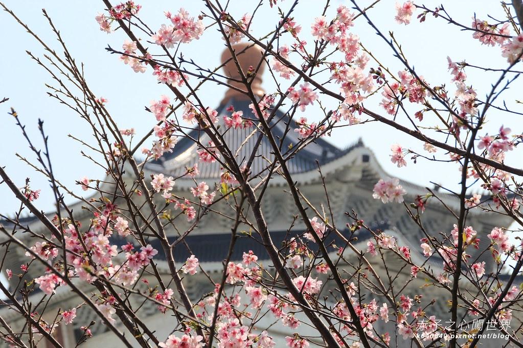 中正紀念堂賞櫻大漁櫻-08