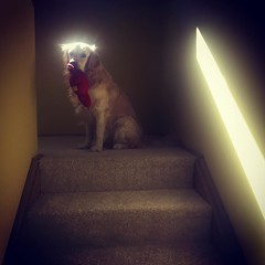 Our holy Dexter. #iphoneography #dogs
