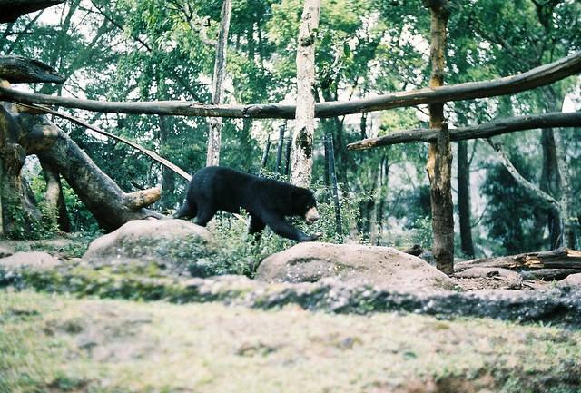 Animal #7