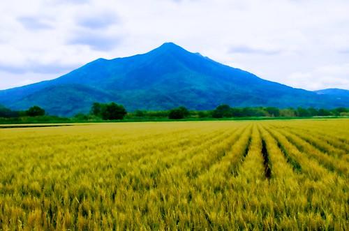 目を上げて畑を見なさい by nomachishinri