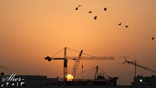 sun birds silhouette horizontal sunrise crane nopeople cannon 500d 70200mml mygearandme gettyimagesmiddleeast