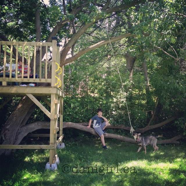 photo of boys playing in a treehouse with a dog