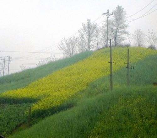 Hubei13-Wuhan-Chongqing-Shaanxi (15)